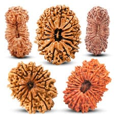 Rudraksha Collector Beads