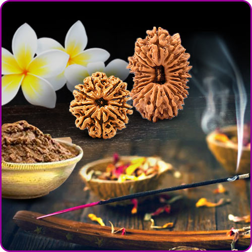 Daily Puja of Rudraksha