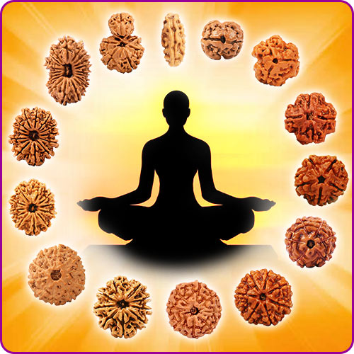 Rudraksha A Therapeutic Approach