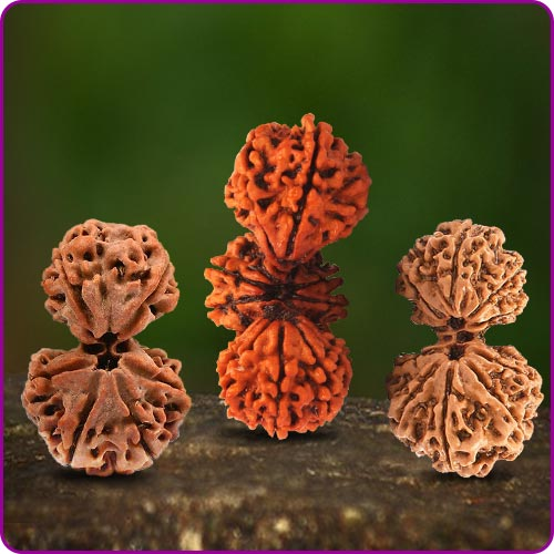 Rudraksha Collector Beads
