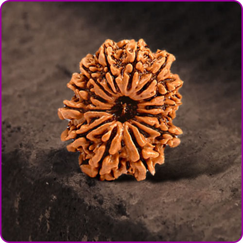 Rudraksha recommended for various physical and mental problems