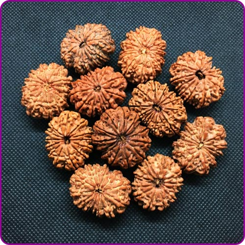 Selection of Rudraksha