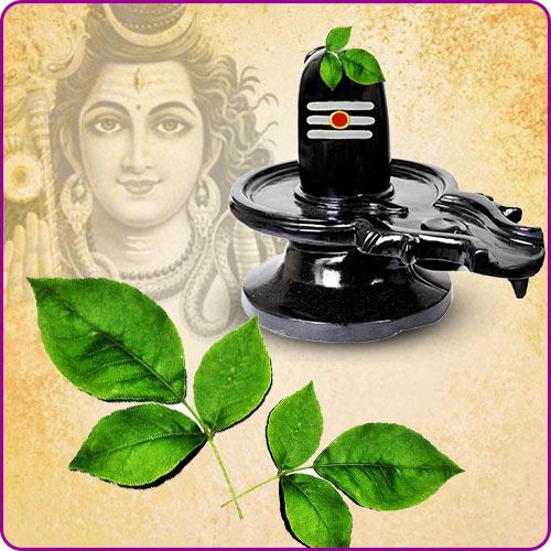Why Does Lord Shiva like Bilva Patra?