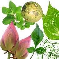 Fresh Herbs Leaves Flowers Seeds