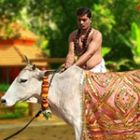 Gau (Cow) Puja & Seva