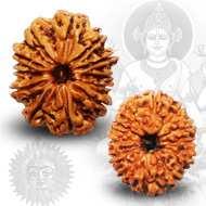 Benefits of <br /> 12 Mukhi Rudraksha
