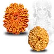 Benefits of <br /> 14 Mukhi Rudraksha