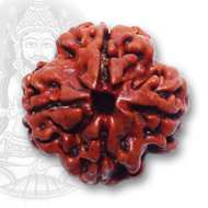 Benefits of <br /> 4 Mukhi Rudraksha
