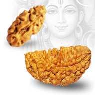 Benefits of <br /> 1 Mukhi Rudraksha