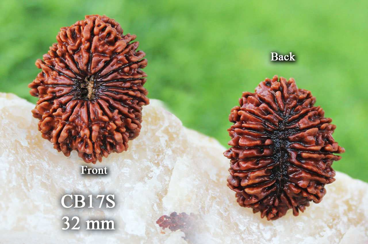 The remarkable effects of a Rudraksha