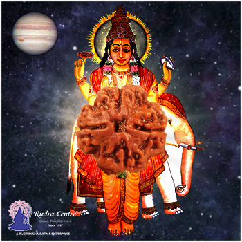 4 Mukhi Rudraksha