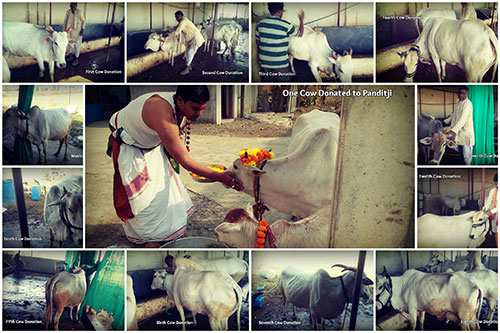Cow_Donation_Collage