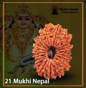 21 Mukhi Rudraksha Nepal
