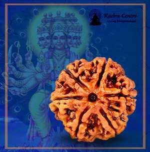 6 Mukhi Rudraksha, Cheh mukhi, Benefits of Original Six mukhi