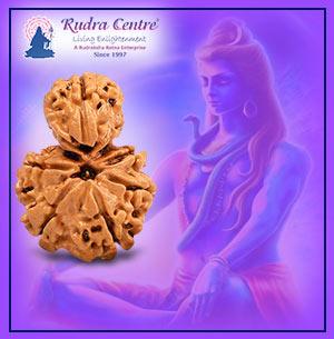 Savar Rudraksha