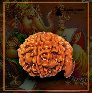 Ganesh Rudraksha