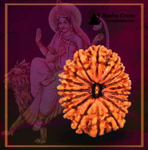 17 Mukhi Rudraksha