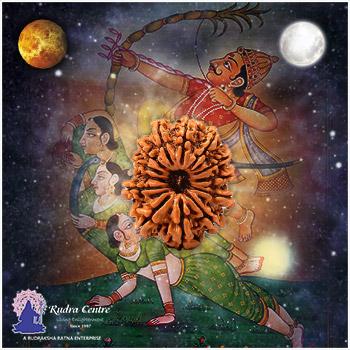 13 Mukhi Rudraksha