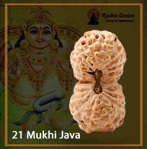 21 Mukhi Rudraksha java