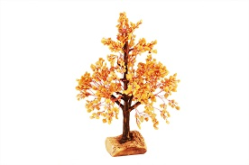 Yellow Jade Vastu Tree (Good Luck Tree)
