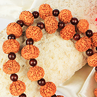 Collector 7 mukhi with Red Sandalwood mala