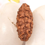 Collector One mukhi from Java - XCX