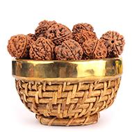 Rudraksha Loose Beads - Nepal
