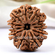 Collector Eleven Mukhi from Nepal - LIX