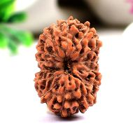 Collector Fourteen Mukhi from Java Indonesia - XI