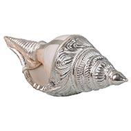 Vamavarti Shankh with 92.5 Sterling Silver Cover - VI