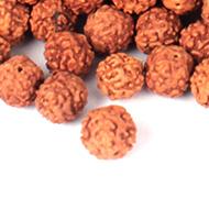 Rudraksha Loose Beads Pack - 10mm
