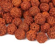 Rudraksha loose beads pack - 13mm
