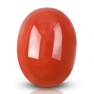 Red Italian Coral - 19.50 carats