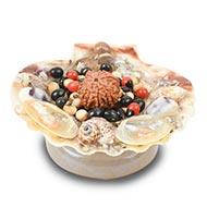 Fortune Sea shell Plate