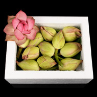 Lotus Flower - Kamal