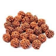 4 Mukhi Rudraksha from Nepal - Loose beads pack