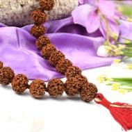 5 Mukhi Nepal Rudraksha beads mala