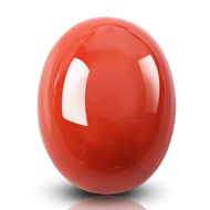 Red Italian Coral - 20.25 carats