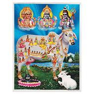 Gomatha Photo - Large