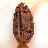 Collector One mukhi from Java - XCII