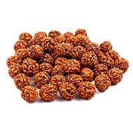 Five Mukhi Loose Beads from Java - 15 mm