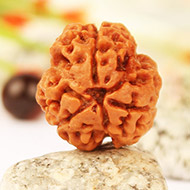 Three Mukhi Round from Nepal - L