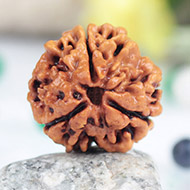 Collector Three Mukhi from Nepal - C