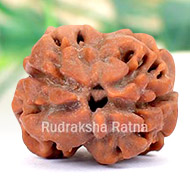 Collector Two Mukhi from Nepal - I