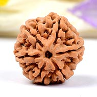 Super Collector Six Mukhi from Nepal - CXXVII