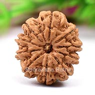 Ten Mukhi from Nepal-Large-I