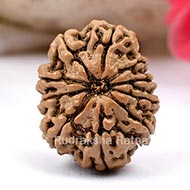 Ten Mukhi from Nepal-Large-VIII