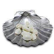 White Cowry Shells