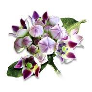 Aak flowers