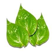 Betel Leaf - Pan